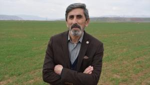 Buğday ekim alanı yüzde 30 artan Sivas'ta bahar yağışları çiftçiye can suyu oldu