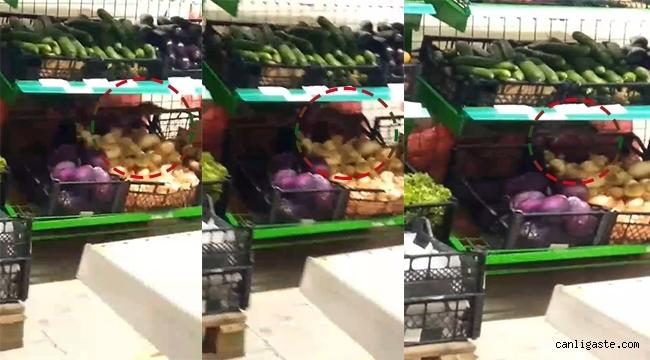 Kayseri'de zincir bir markette kedi büyüklüğünde fare!