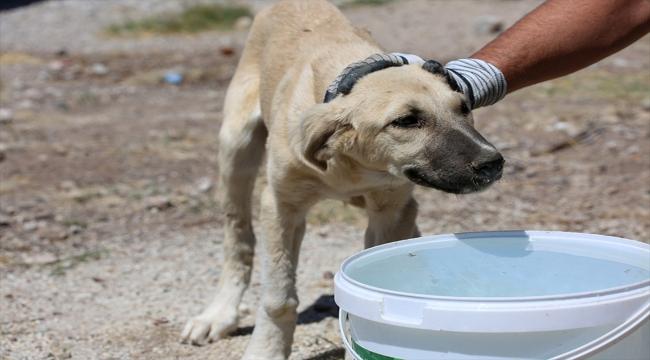 Meram Belediyesi'nden sokak hayvanlarına su ve mama takviyesi