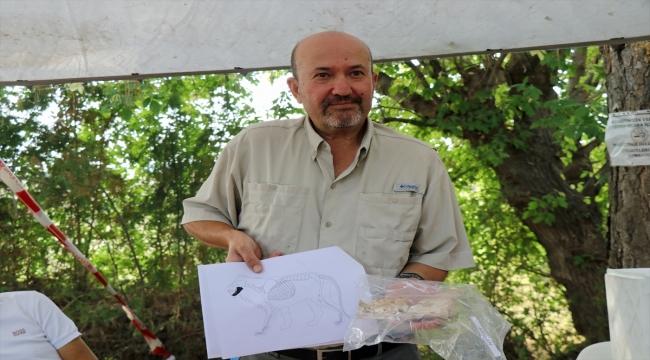 Kültepe'de 4 bin yıl öncesine ait aslan çene kemiği bulundu
